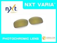X-SQUARED - Gold Varia - NXT® VARIA™ Photochromic